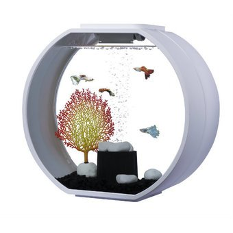 What fish are best for my 20 litre fish tank aquatics world for Aquarium boule 20 litres