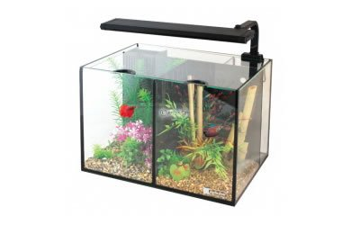 Internal filters archives fish tank reviews advice for Aquarium boule 20 litres