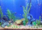 45 litre fish tank