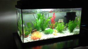 50 Litre Fish Tank 2