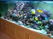 500 litre fish tank