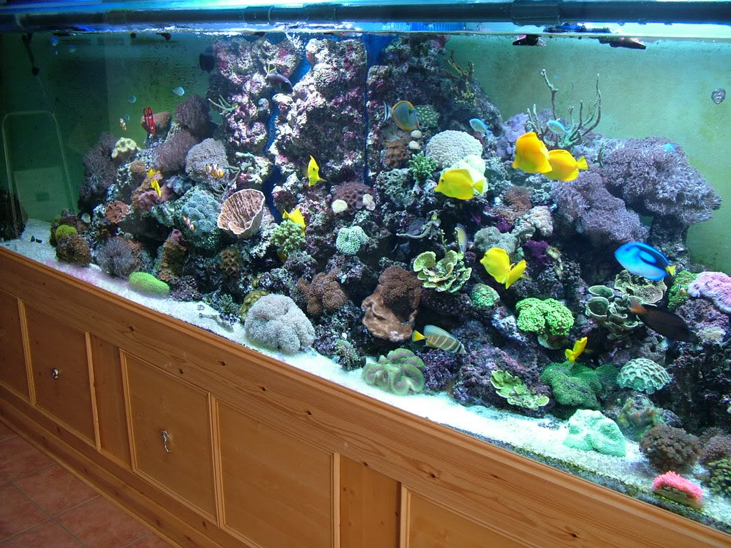 Tips on Picking a Large 500 Litre Fish Tank