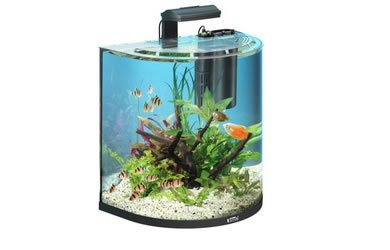 Fish tanks archives page 2 of 3 fish tank reviews for Decoration aquarium 60 litres