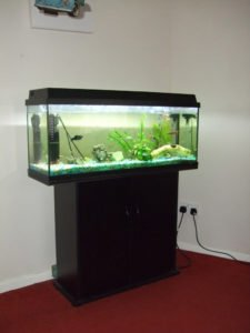 the best invertebrates for a 90 litre fish tank aquatics world. Black Bedroom Furniture Sets. Home Design Ideas