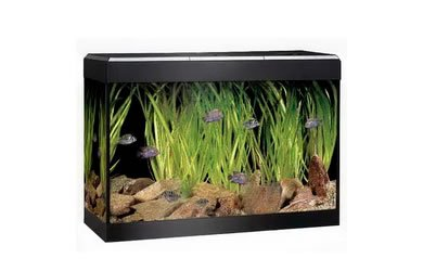 45 litre fish tanks what you need to know aquatics world. Black Bedroom Furniture Sets. Home Design Ideas