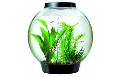 BiOrb Fish Tanks