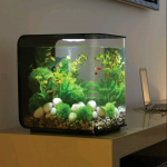 Biorb fish tanks
