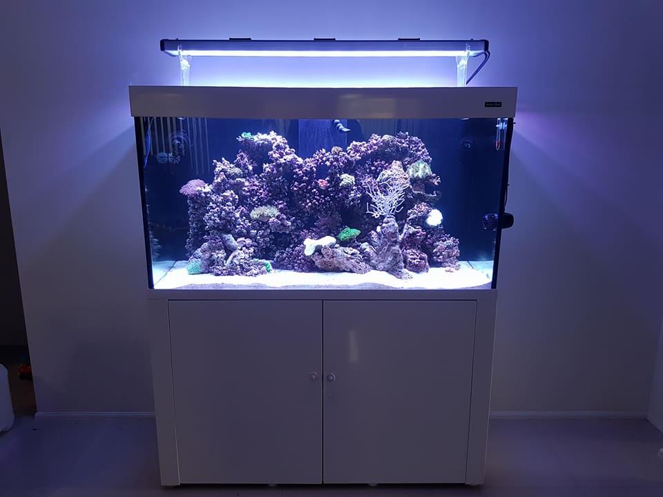 Fish & Aquariums Aquaone 130 Marine Tank