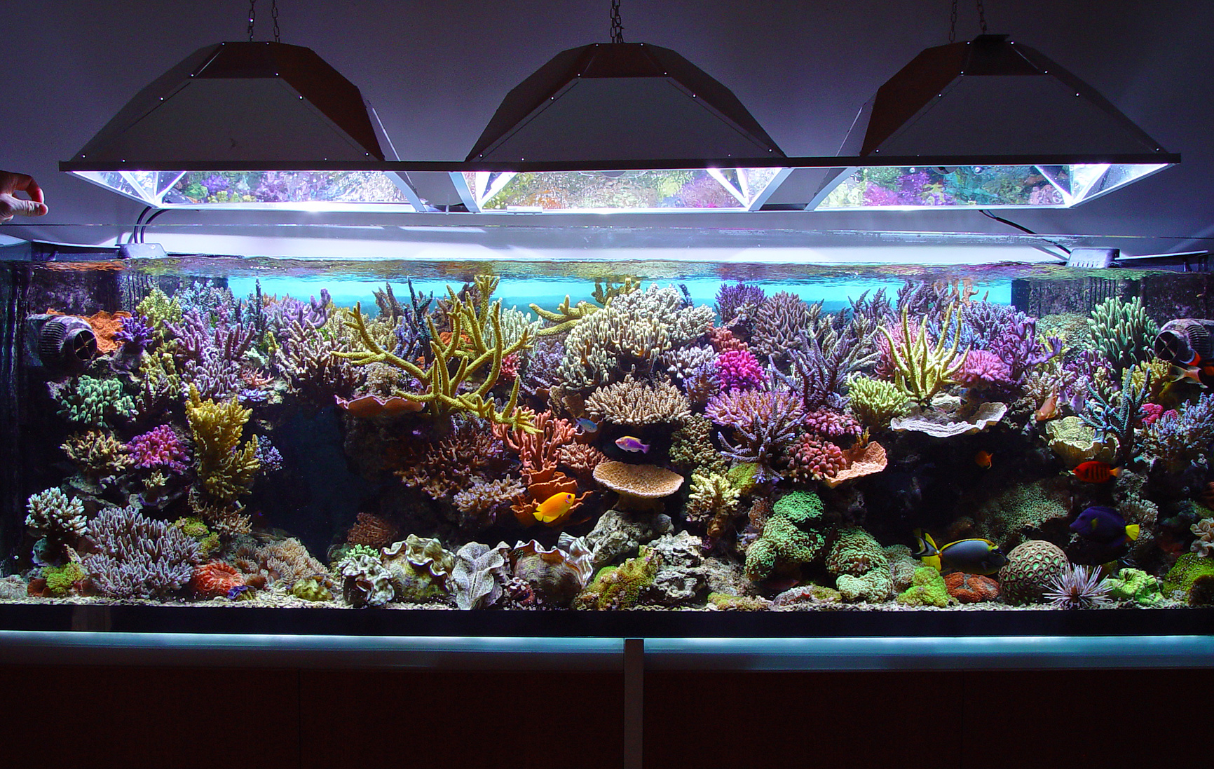 Fish tank set up starting your saltwater aquarium for Setting up a fish tank