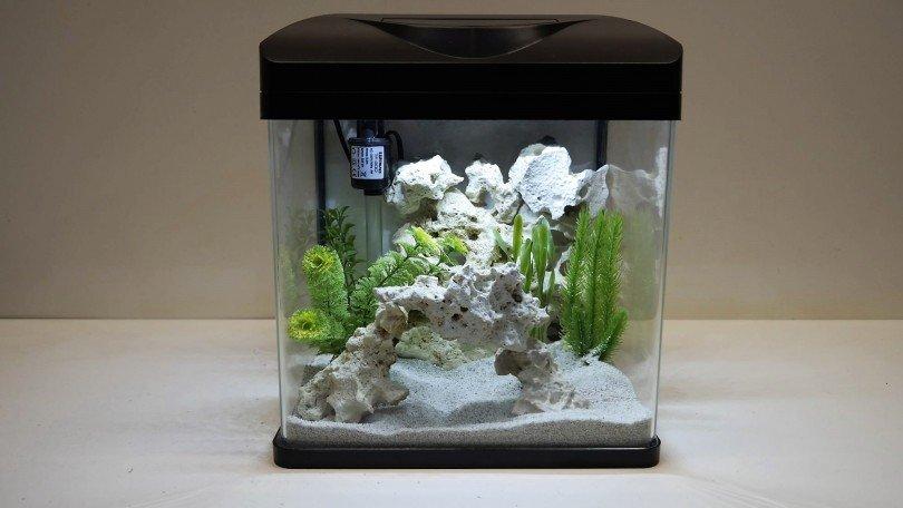 5 Small Fish For Your Mini Aquarium Set Up