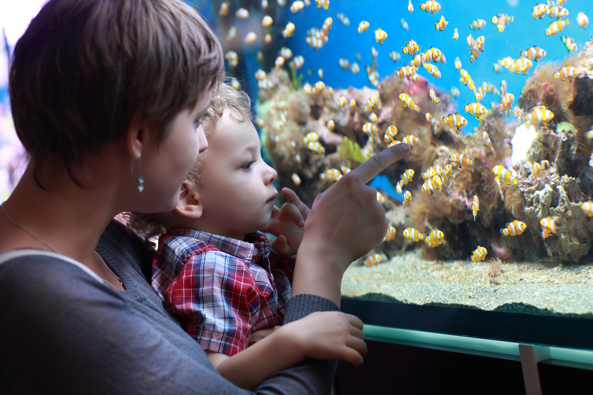 Why Should You Use a Canister Filter for Your Aquarium?