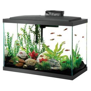Aqueon 20 Gallon Fish Tank