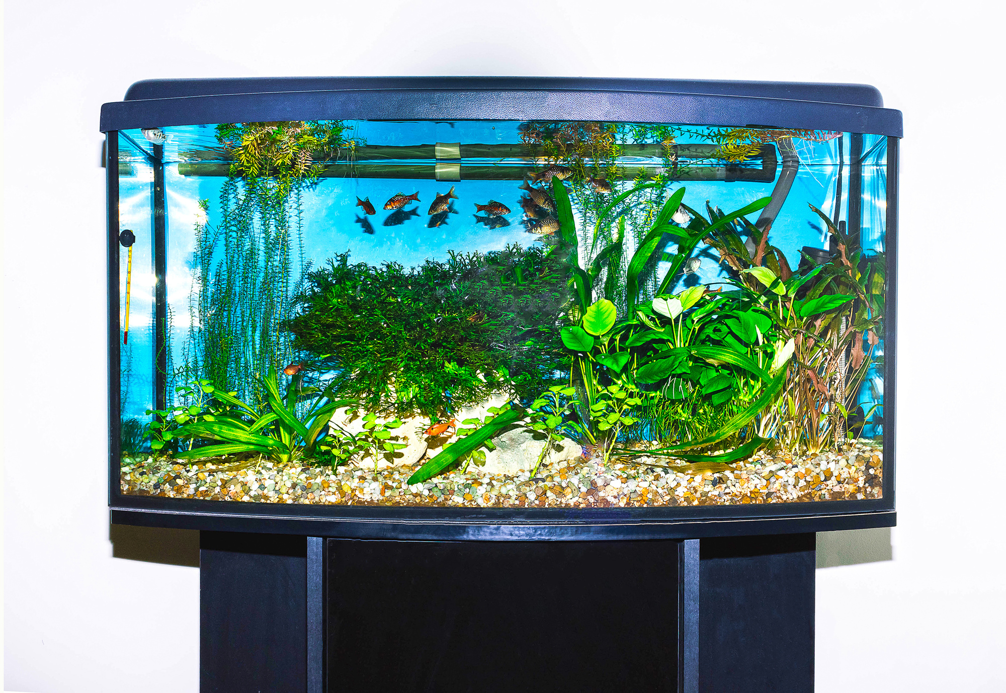 Top ten 20 gallon fish tanks for your home of office for Coolest fish in the world
