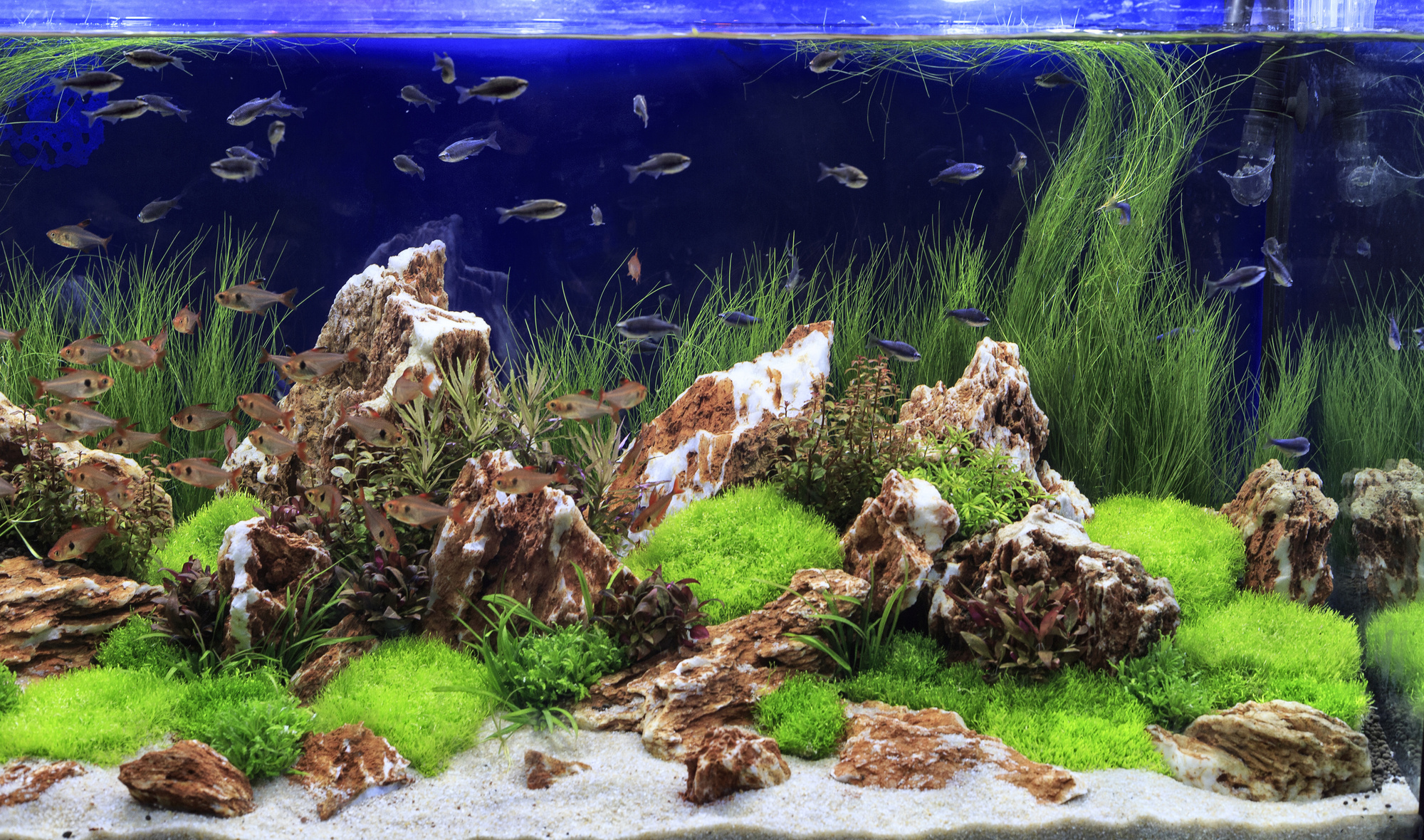 8 Freshwater Aquarium Plants for a Successful Fish Tank Setup
