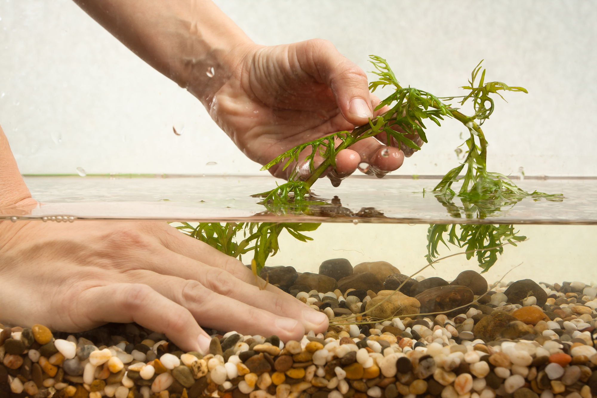 How to Choose the Best Aquarium Substrate for Your Planted Tank