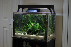 20 gallon fish tank