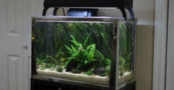 How To Choose The Best 20 Gallon Fish Tank