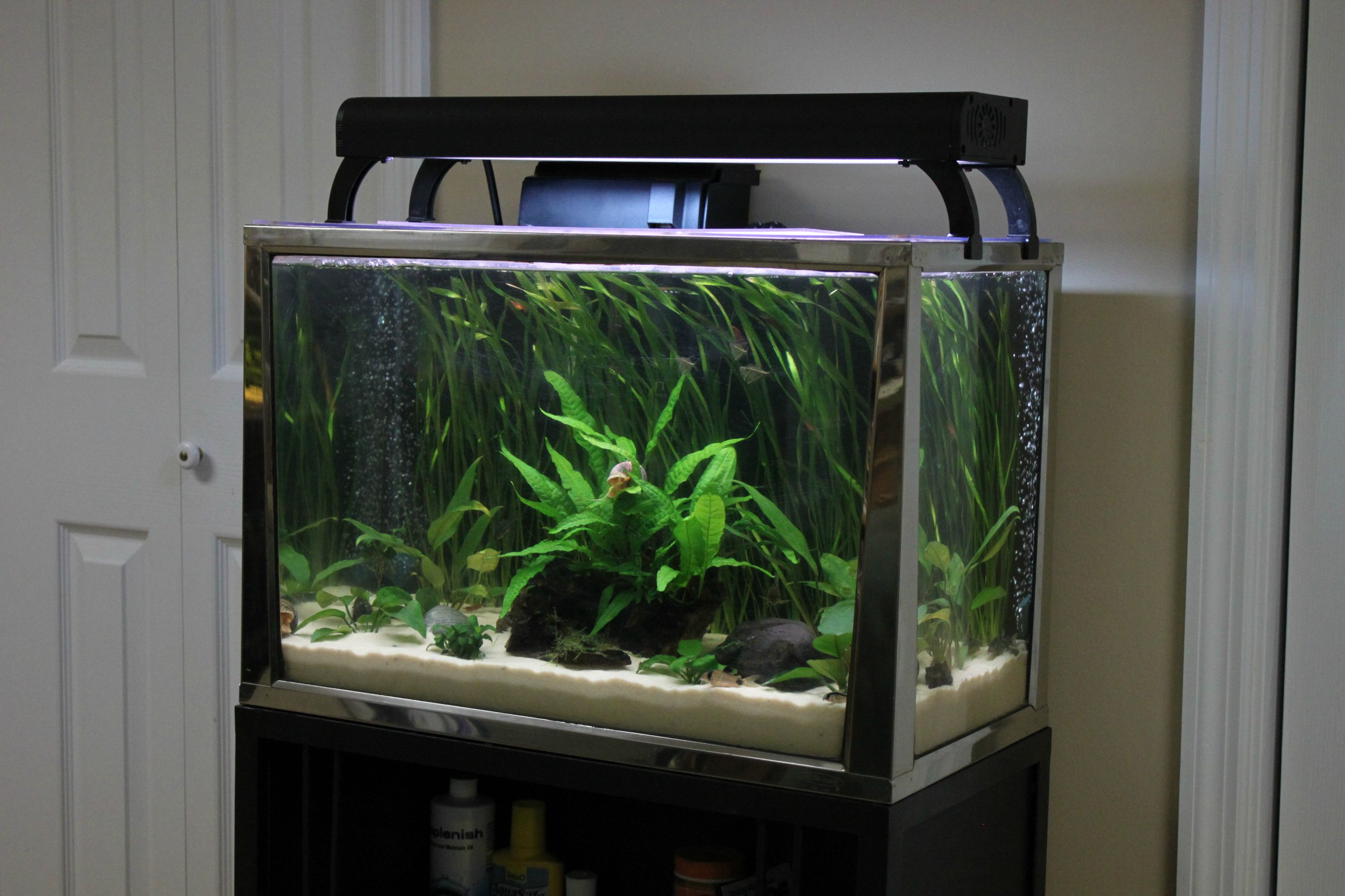 All You Need To Know About 20 Gallon Fish Tanks Aquatics