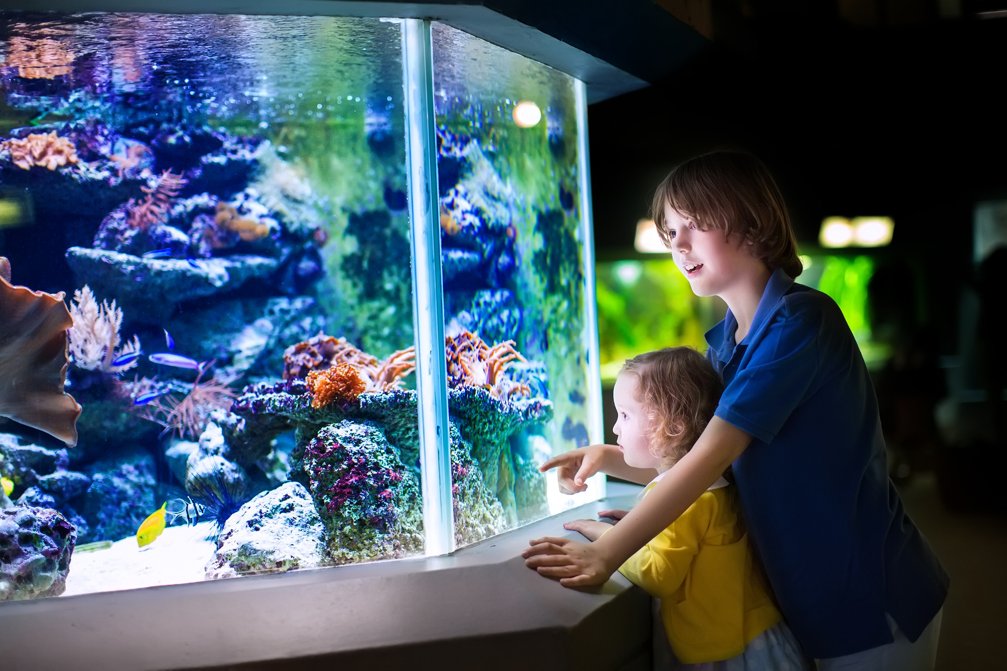 8 Unique Aquarium Design Ideas Sure to Get Attention