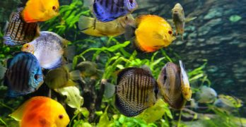 The Best Tropical Aquarium Fish for Beginners