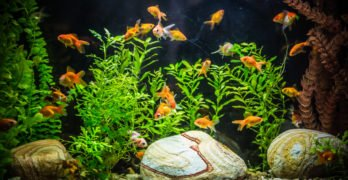 How To Lower Ammonia Levels in Your Fish Tank