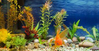 the latest fish tank reviews advice aquatics world