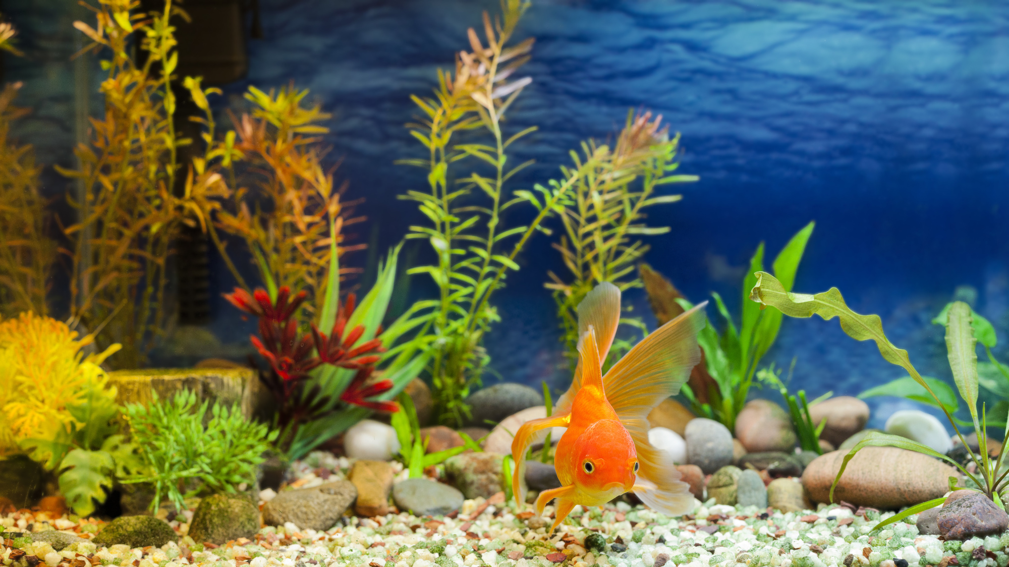 how to clean a fish tank the ultimate guide aquatics world