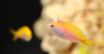 how to get rid of flukes on fish