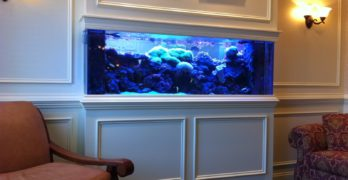 Fish Tank Buyers guide