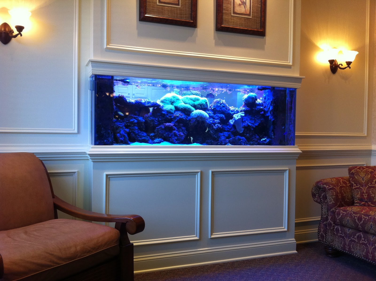 fish tank buyers guide aquatics world