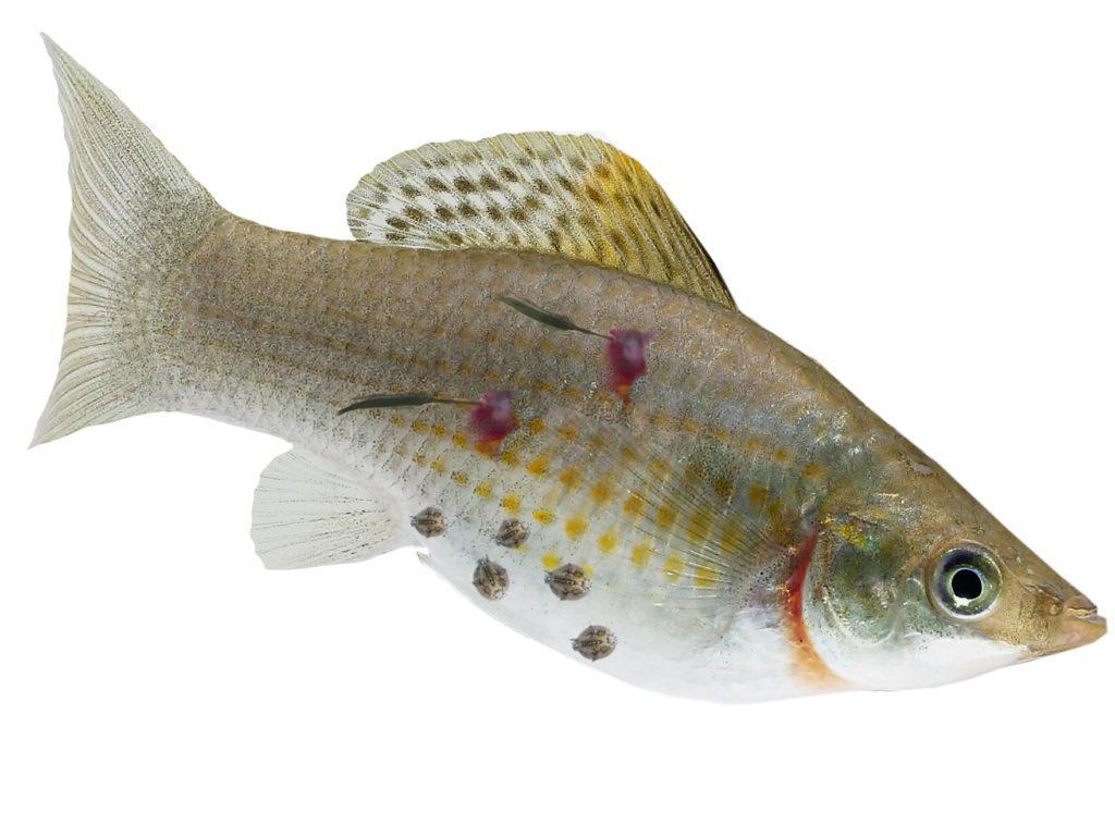 How to Treat The Most Common Fish Disease - Aquatics World