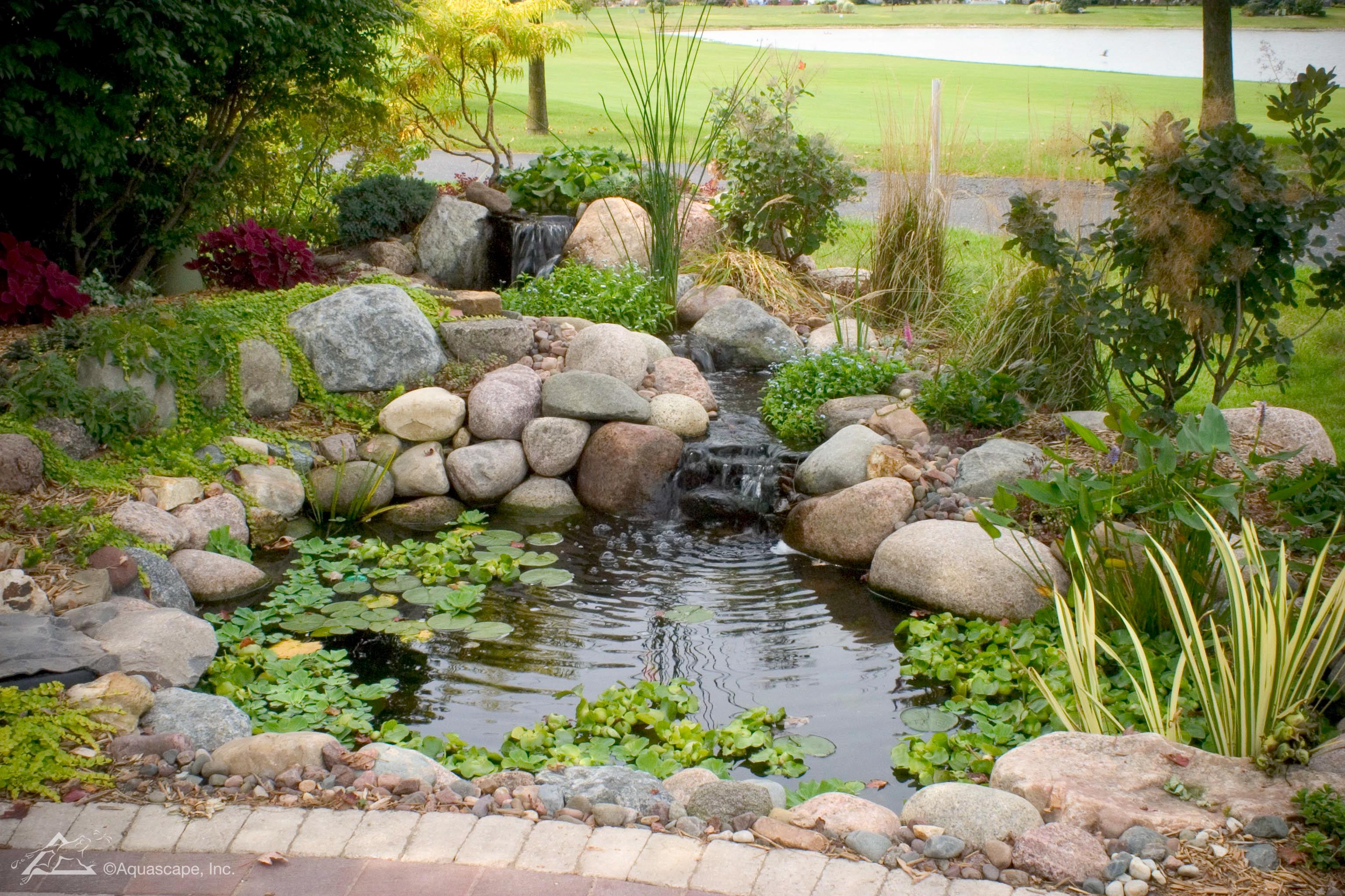 Garden Pond Guide